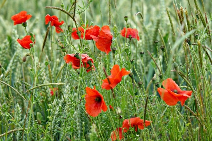 How to visit the Somme with children