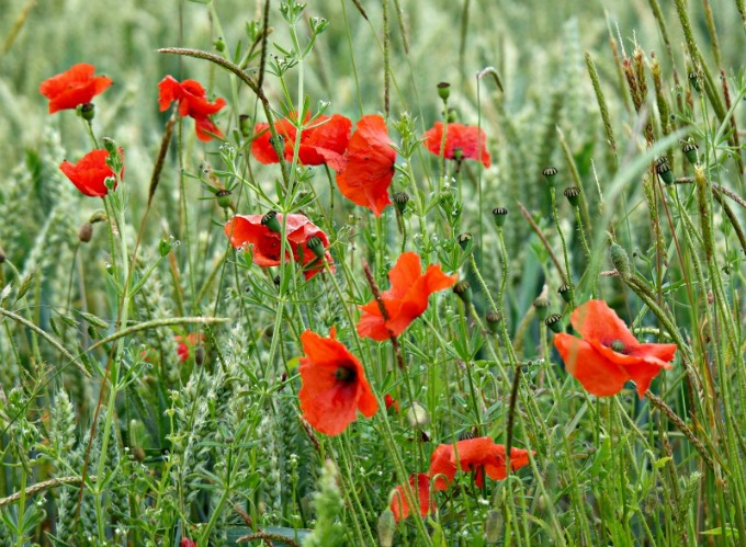 Visit the Somme with children